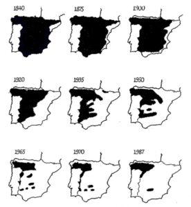 evolucion-poblacion-lobo-iberico